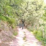 Rutes a peu Catalunya